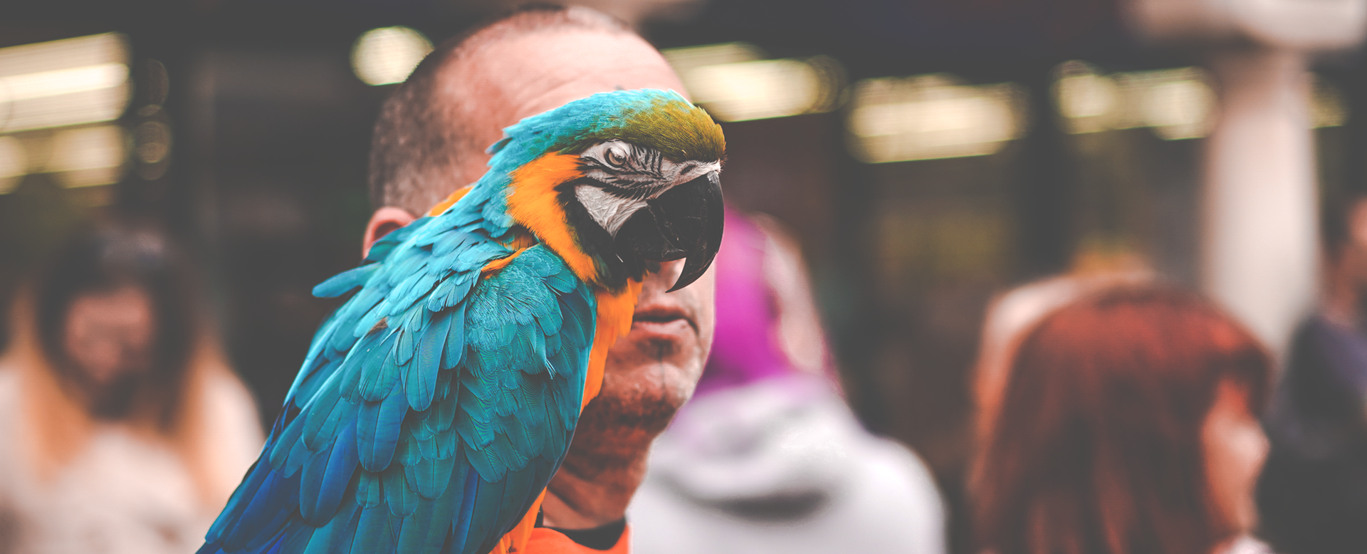 Man with parrot in High Wycombe